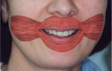 muscles-speech-swallow